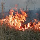 Incendiu vegetatie uscata Foto: observator.ro